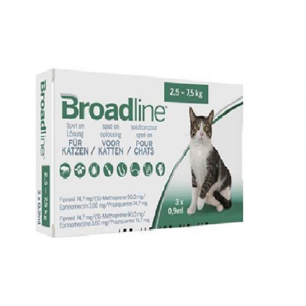 Broadline Kat